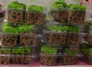 Minecraft party favours